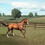 My-Horse-img1